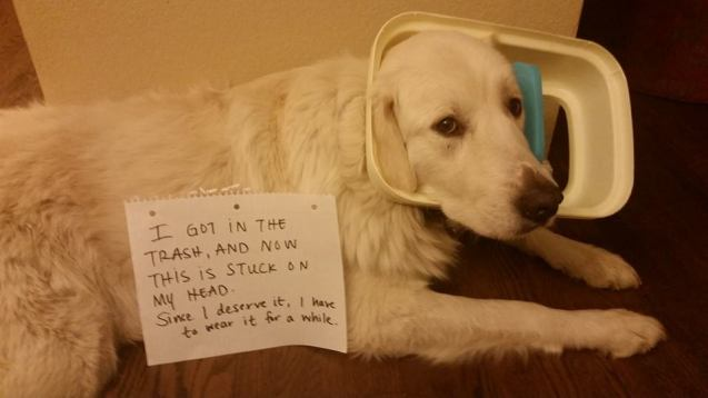 The 30 Best Dog Shaming Photos Ever