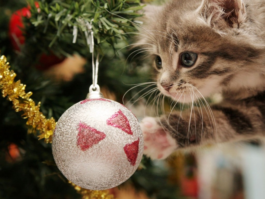 cat_christmas_games