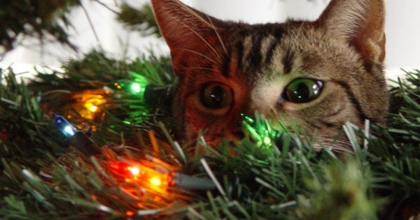 This Video Of Cats Attacking Christmas Trees Is Sheer