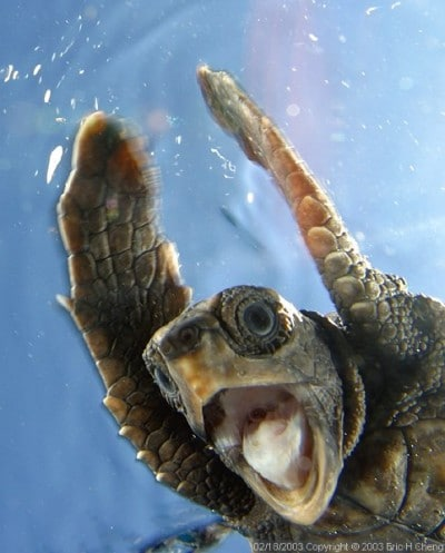 excitedturtle