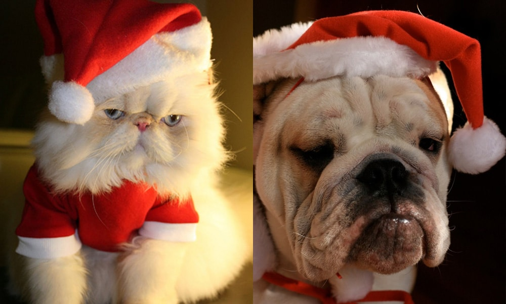grumpy_cat_dog_christmas