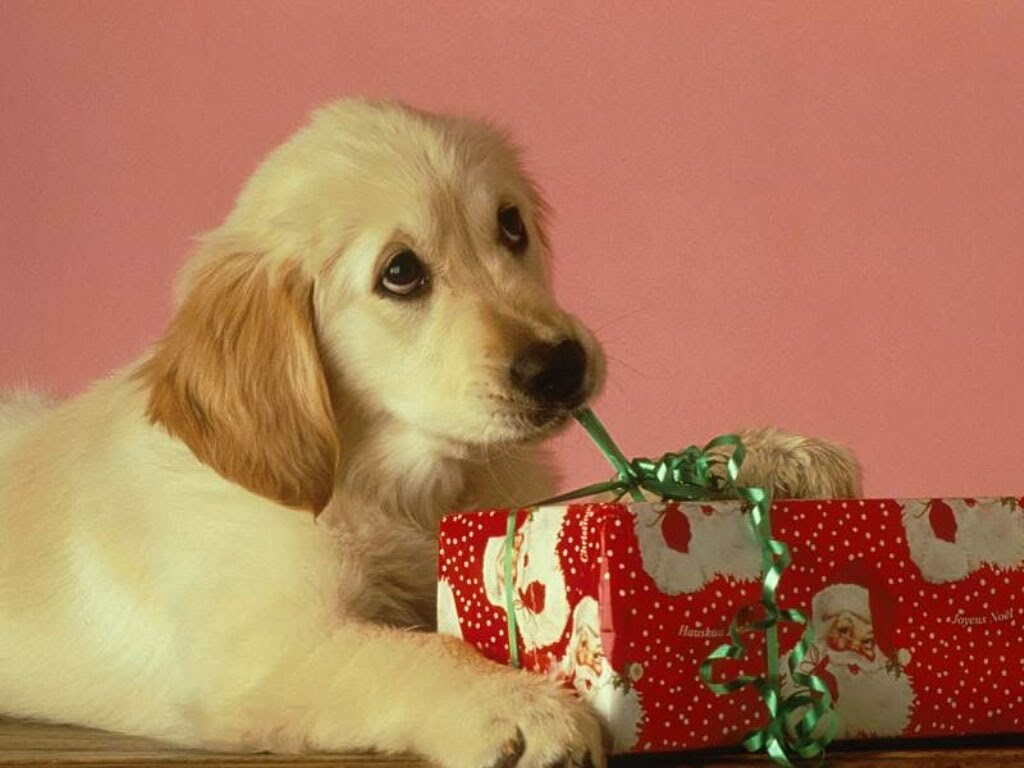 puppy_christmas_present