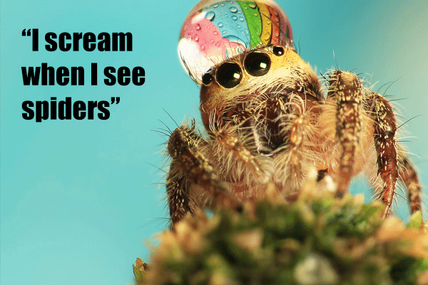 I scream when I see spiders