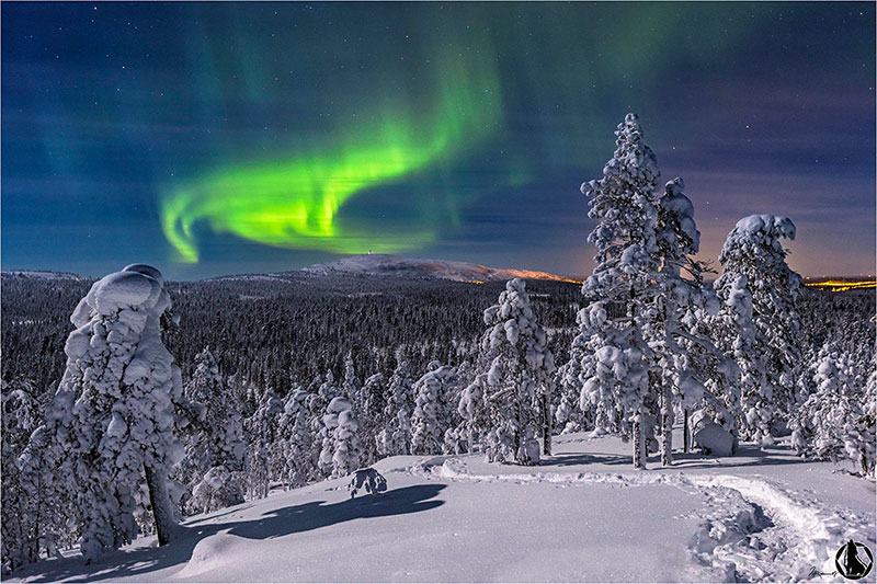 Aurora Borealis over the forest of the Pyhae Luosto National Park, Finland.