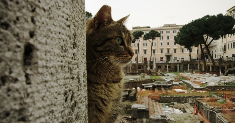 cats_rome