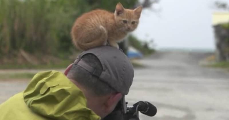 kitten_preview